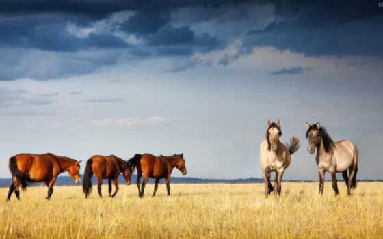 лошади, грациозные
