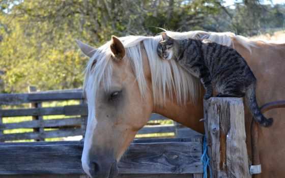кошка, дружба