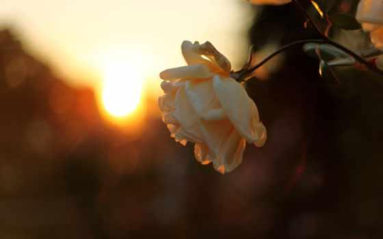 sun, небо, лучи