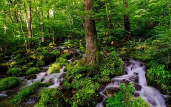 лес, ручей, desktop