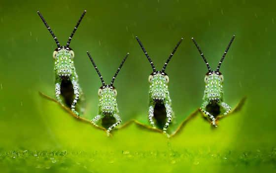 насекомое, квартет,