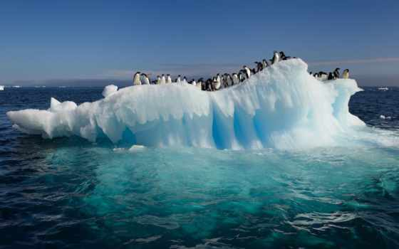 антарктида, пингвины, океан