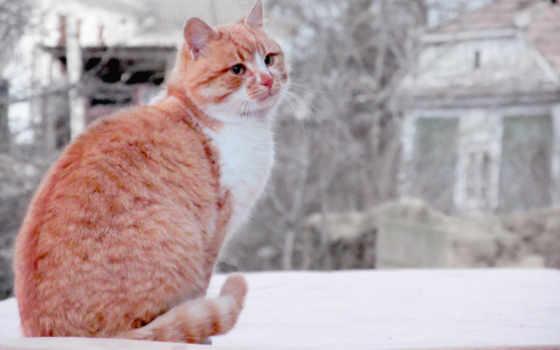 red, кот, sur