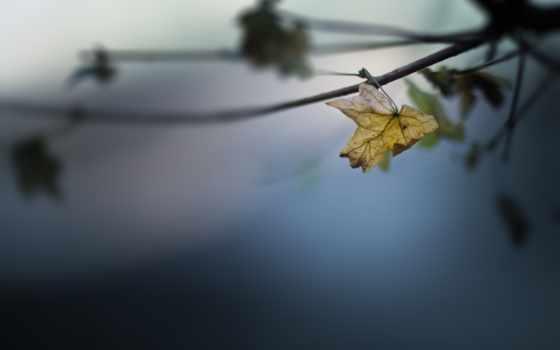 осень, листья, photos, onedslr, views, stock, фото, природа, макро,