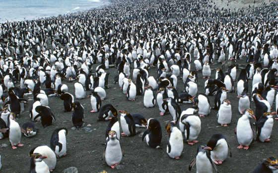 пляж, пингвины