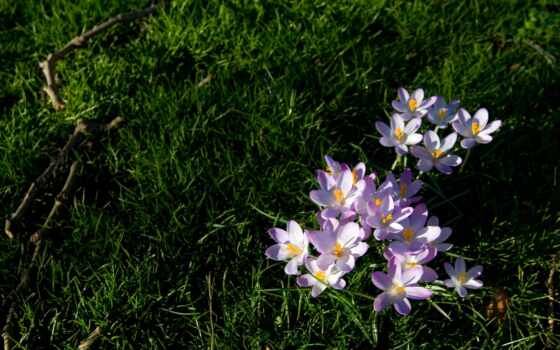 цветы, природа, растительность