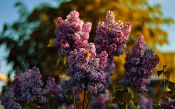 Цветы 100132