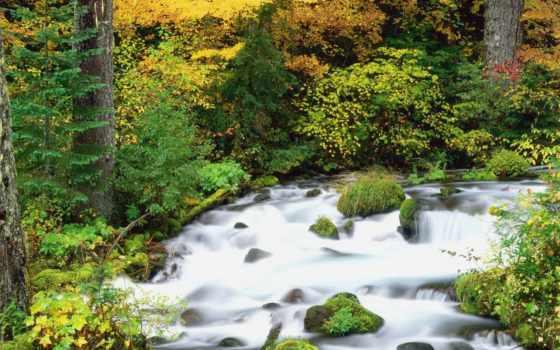 oregon, лес, national, willamette, осень, desktop, trees, природа,