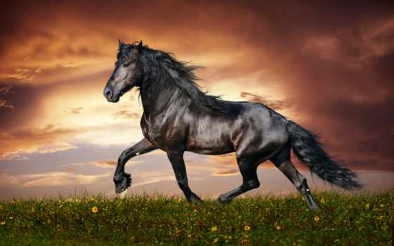 summer, лошадь, трава, поле, заставки, спорт, лошади, кони,