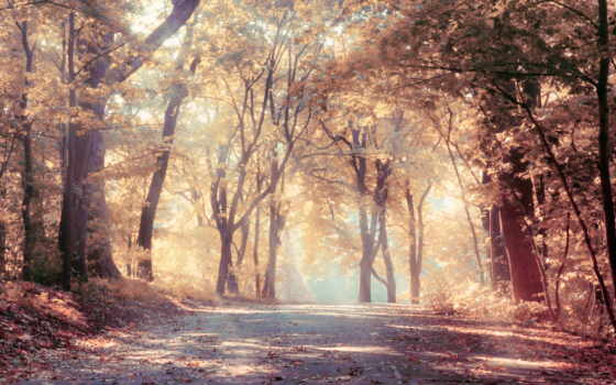 природа, trees, лес, осенние, листья, осень, дорога, листва, scenic,