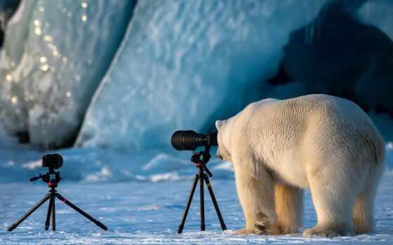 самый, медведь, фото, funny, животные, polar, фотоаппарат, contest, комедия, award, wild