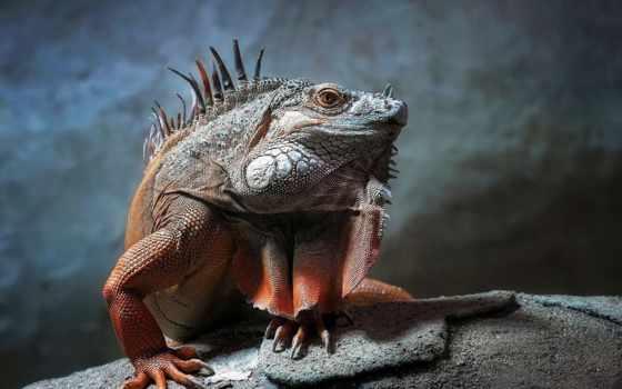 рептилии, животные, рептилия Фон № 36482 разрешение 1920x1080