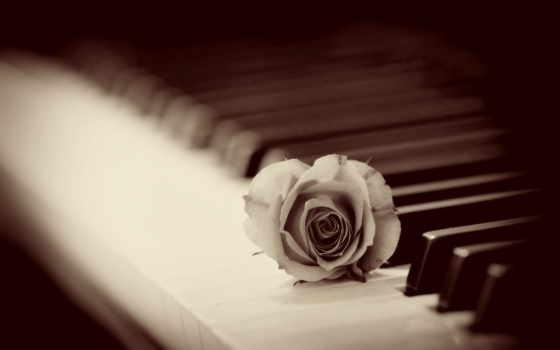 piano, alex, роза