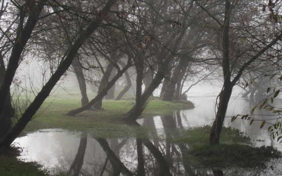 water, деревя, отражение