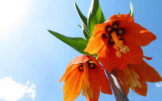 цветы, красочные, color