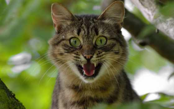 кот, scream, глаза, free, high, widescreen, дерево,