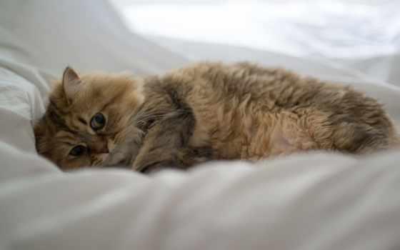 torode, красивые, кот, benjamin, бен, daisy, разные, заставки, zhivotnye, daily, только,