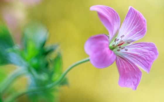 flowers, обсуждение, purple, озеро, liveinternet, качели, fondos, pantalla, russian,