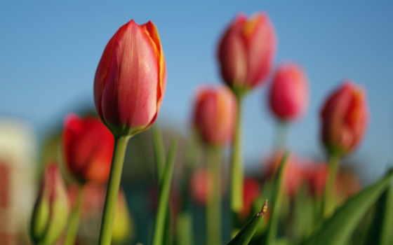 природа, цветы Фон № 25433 разрешение 1920x1200