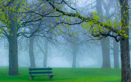 парк, трава