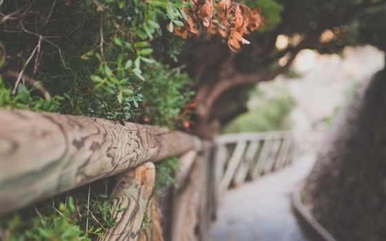priroda, листва, деревя