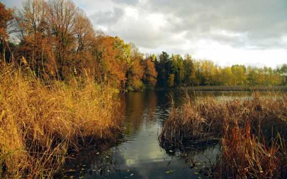 пейзажи -, красивые, природа, природы, россии, trees, река, dry, камиш, favourite,