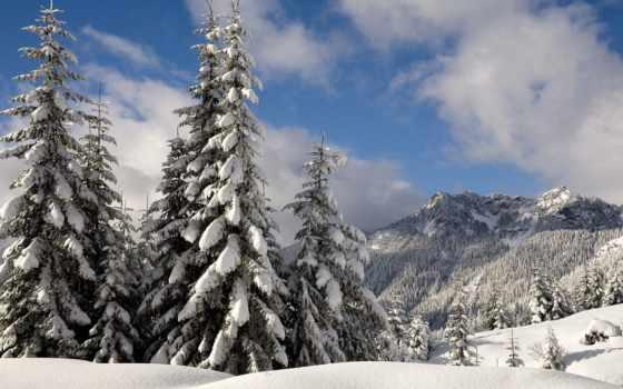 eli, снег, ветви, гравитация, washington, winter,