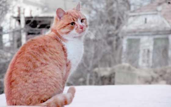 кот, nieve, изображение, desktop, winter, zhivotnye,
