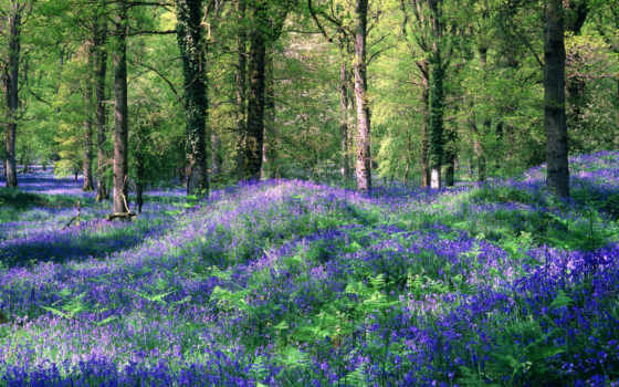 cvety, поляна, цветов, лес, голубых, зелёный, лесу, разрешениях, like, ландыши, разных,