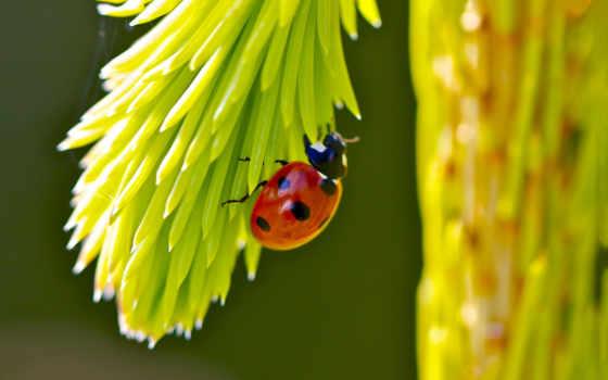сайт, photos, ecran, fond, fonds, hebus, animaux, insectes, coccinelles,