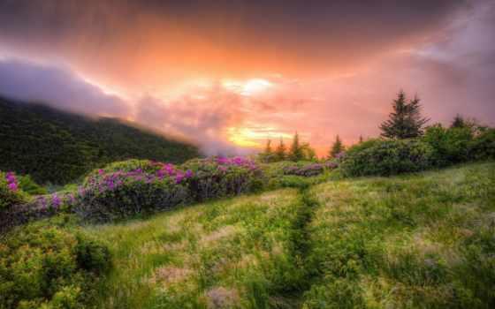 поле, desktop, пейзажи -, sun,