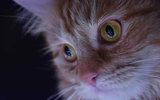 кот, desktop, взгляд, поза, смотреть,