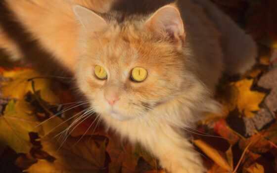 red, кот, best, уж, листва, loaded