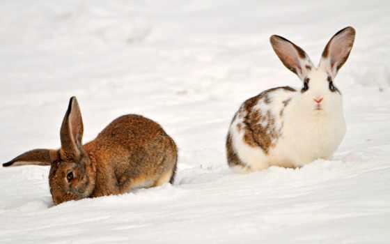 кролики, krolik, высокого