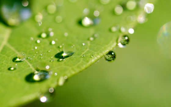 leaf, wet, макро