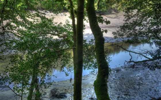 картинка, trees, изображение, англия, neighborhood, природа,