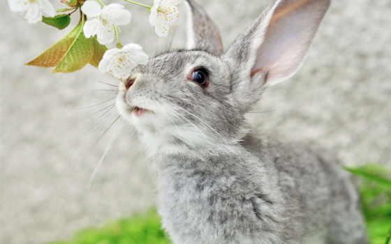 кролик, цветы, картинка, уши, кролики, животные, девушка, ус,
