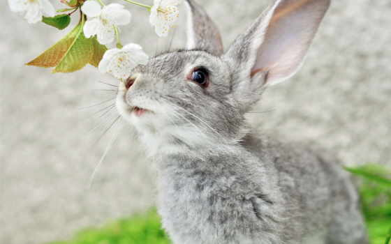 кролик, цветы, картинка