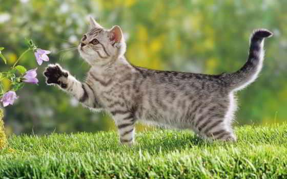 цветы, кошки, игры, природа, curious, кот, заметил, котенок, прогулке,