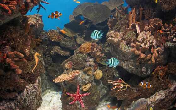 live, fish, ocean, живые, океанов, android, apk, zhivotnye,