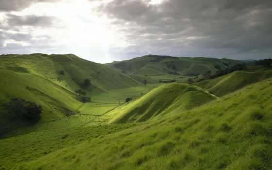 природа, новая, zealand, зеландии, новой, зелёный, холмы, небо, поле,