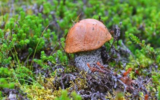 году, грибов, этом