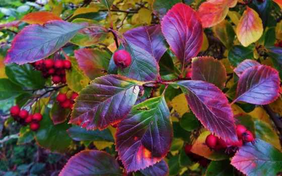 bush, макро, осень, лучшая, загружено, уже, коллекция,
