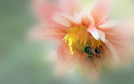 макро, цветок Фон № 23919 разрешение 2560x1600