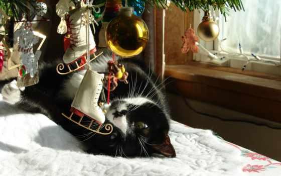 елка, кот
