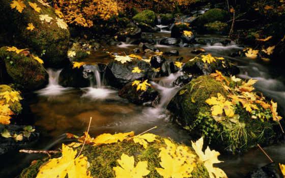 ноября, красивые, просмотров, комментарии, нов, ноябрь, сайте, можно, найти, такие, нашем,