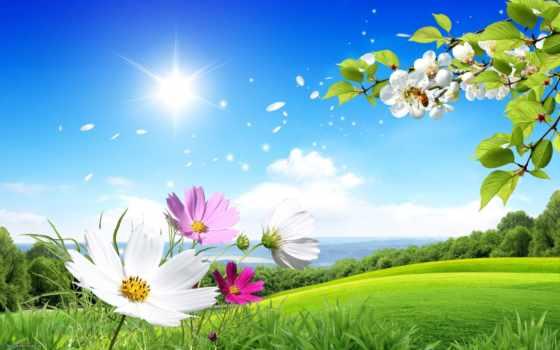 scenery, flowers, summer, images, цветы,