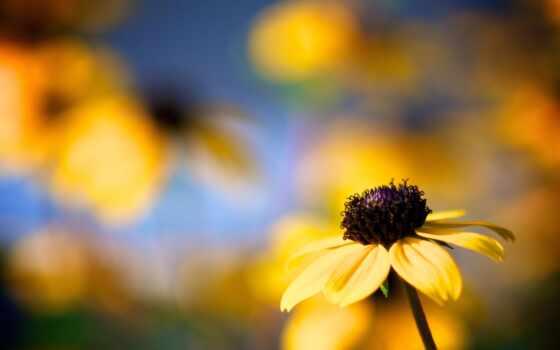 цветы, макро, flowers