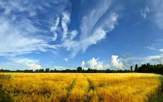 поле, поля, пейзажи -