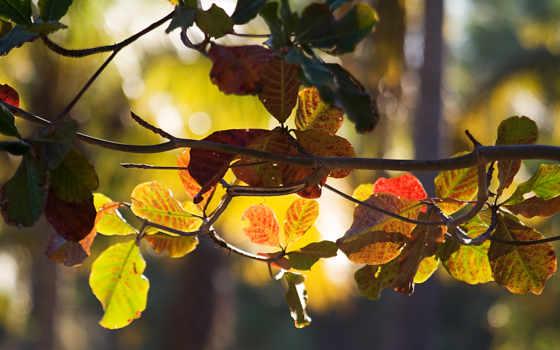 осень, bokeh, ветки